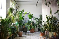 Moon to Moon: Welcome to the Jungle.....resilient house plants and those that let them take over their homes