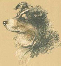 LucyDawsonsheepdog.jpg 346×375 pixels
