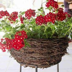 Risut taipuvat helposti amppeliksi. Lue ohjeet Viherpihasta ja kokeile! Grapevine Wreath, Garden Furniture, Container Gardening, Yard, Wreaths, Plants, Home Decor, Roe Deer, Garden Ideas