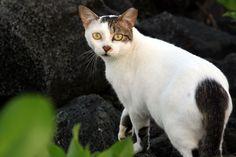 Feral cat - Wikipedia