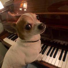 Maestro Pancho. #nicandpancho #pancho #pianist