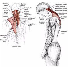 15 Estiramientos para aliviar la tensión en el cuello y los hombros - Mundoamores Stretching, Reiki, Pilates, Fitness, Massage, Gym, Workout, Health, Yoga