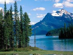 Jasper National Park is the largest national park in the Canadian Rockies.