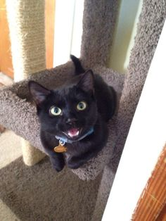 This very proud little smiler. | 23 Cat Pictures That Will Make You Almost Too Happy