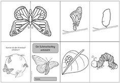 """Ideenreise: Faltheft """"Ein Schmetterling entsteht"""" Schmetterling  Insekten Metamorphose"""