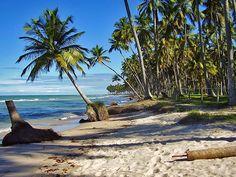Ilha de Santo Aleixo e praia dos Carneiros (Barra do Sirinhaém e Tamandaré - PE)