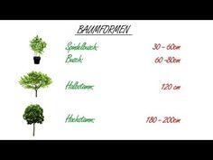 Obstbaumschnitt Der Kurs Theorie Kap. 4 Baumformen - YouTube