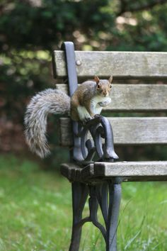 Hi, I'm waiting on Clara, she always brings bread crumbs and sunflower seeds.  We just have the best of times here on our bench!