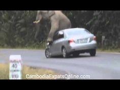Elephant Attacks Car in Thailand NationalPark 2015