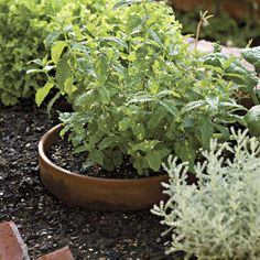 86 Creative Container Gardens | Mint | SouthernLiving.com