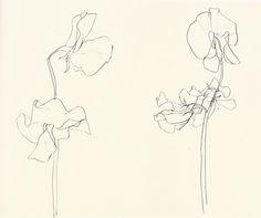 Ellsworth Kelly flower drawings