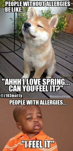 """People without allergies be like, """"Ahhhh, I love spring! Can you feel it?"""" and people with allergies: I feel it. LOL"""