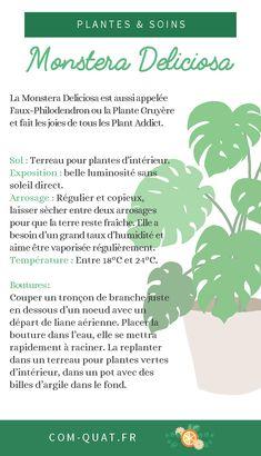 Best Indoor Garden Ideas for 2020 - Modern Monstera Deliciosa, Plante Monstera, Bonsai Garden, Garden Plants, Indoor Garden, Indoor Plants, Cactus Terrarium, Decoration Plante, Landscaping
