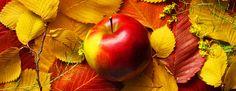 L'Automne : période de la Pomme