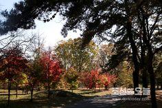 평양의 가을풍경(2)