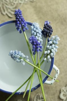 Blue and purple grape hyacinths on the edge of a bowl