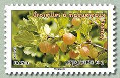 Groseilles à maquereaux France