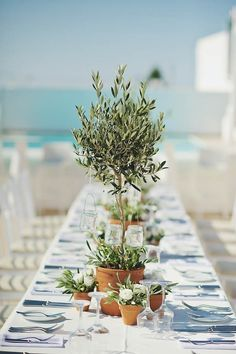 Greenery in terracotta pots & low, wide planters make gorgeous green tablescapes   Image by Thanasis Kaiafas