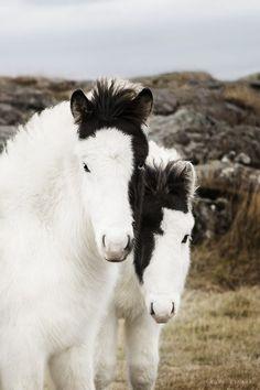 Schöne Pferde ... Schöne Fotografie