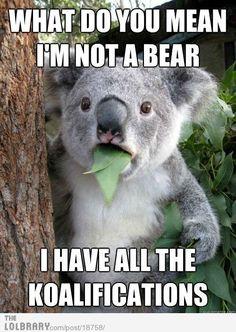 Koala can't believe it