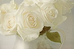 White Rose Photograph Fine Art Photograph Title by JudyStalus, $50.00