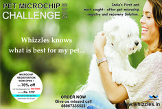 #‎Whizzles‬ knows what is best for my ‪#‎pet‬.... ‪#‎petmicrochip‬ ‪#‎petrescue‬