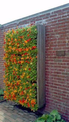 Beautiful Vertical Flower Garden