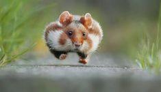 La commedia della natura: quando gli animali sono uno spasso - Corriere.it