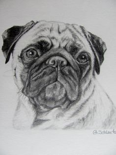 The Pug Sketch by gensart on Etsy
