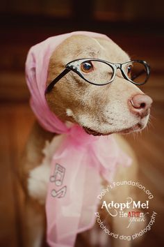 1523ccc46a50 Nerdy dog. Meet GERTIE – A petite and independent southern lady who prefers  the company of people to