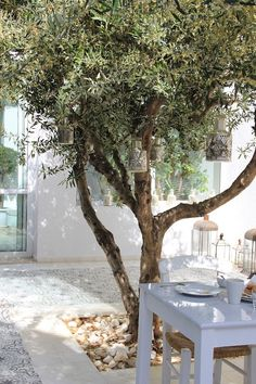 Courtyard olive tree. I've always wanted an olive tree - with lights, of course.