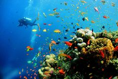 World's Most Beautiful Diving Sites
