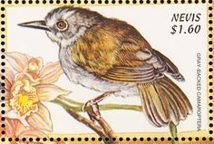 Grey-backed Camaroptera stamps - mainly images - gallery format