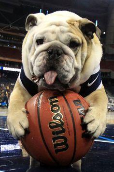 Blue II  #Bulldog