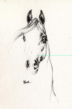 Arabian Horse Sketch 2014 05 29d Drawing