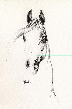 Arabian Horse Sketch 2014 05 29d Drawing