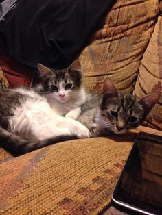 My Two Kittens!!!