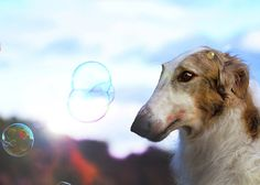 GAME Dog and Bubbles -  Kids love bubbles. But guess what? Dogs do, too! Bubble-chasing mimics predatory behavior such as preying on small animals like birds or bugs. Dogs are readily entertained by observing, chasing or snapping at passing bubbles. Just be sure to use pet-safe bubbles that are nontoxic if they get near your dog's eyes or are accidentally ingested.