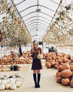 Pumpkin Graveyard – Makenna Alyse  fall style