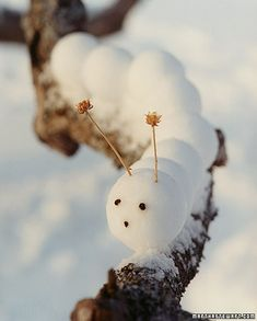 The rare snowball caterpillar is native to chilly climates. Its larger-than-life body is easy to spot and to create if you use a snowball maker, a tool that forms perfect spheres of snow. Id love to find one in my winter window box!