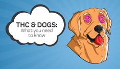 THC and Dogs: What You Need to Know | Innovet Pet Dog Health Tips, Dog Health Care, Nausea Relief, Pain Relief, Dog Seizures, Compass Logo, Oils For Dogs, Cannabis Plant, Hemp Oil