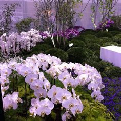 Orchids, orchids, orchids. I WANT my backyard to look like!!!!