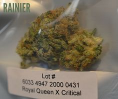 We get a good amount of grief about the packaging but looks like PNW has it down! Their Royal Queen Critical X is looking yummy and ready for customers to enjoy! Feel like royalty with this one :) #wacannabis #legalweed #weedsmokeit #rainierrec #tacomaweed #i502