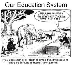 Funny but true. A little humor around standardized testing in education :) Education System, Education Quotes, Albert Einstein Quotes Education, Learning Quotes, Decir No, The Selection, Natural Selection, Me Quotes, Funny Quotes