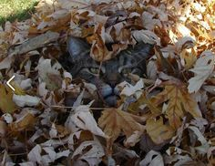 KEEPING CATS OUT OF THE GARDEN   thegardengeeks