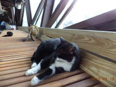 Pussycat Overpass: Taiwan's First Cat Bridge Is Meow Open!  ... from PetsLady.com
