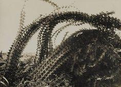 German razor wire. Arras, 1917