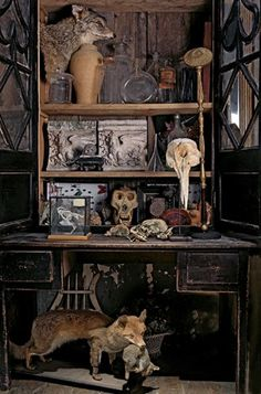 """Cabinet of curiosities composed of dolphin and gorilla skulls, a stuffed fox holding a rabbit in its mouth, a hen's skeleton, an early nine..."