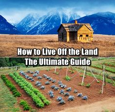 How to Live Off the Land - The Ultimate Guide