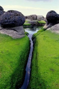 Mossy inlet, Iceland.   This is why I want to go to Iceland